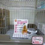 1月25日 小動物ケージ特売!