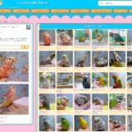 五十音順の鳥さん図鑑