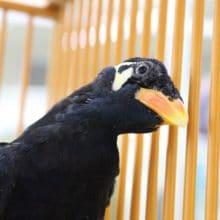 おしゃべり上手な九官鳥が船橋二和店にいます!