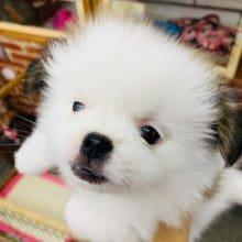 写真更新しました!つぶらな瞳のMIX犬!オススメのコです♪