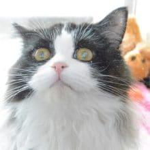 毛並みがサラサラなネコちゃんいます