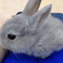ミニウサギ♪