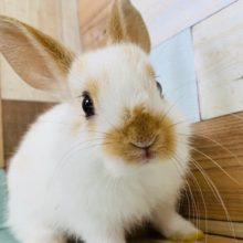 兄弟ミニウサギが入舎です♪