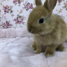 ミニウサギオレンジ在舎しております!! 4/24投稿