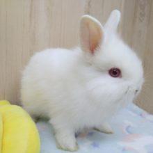 フワフワわたあめみたいなウサギさん来ました〜